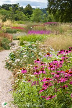 A path winds its way through the Floral Labyrinth at Trentham Gardens, Staffordshire, designed by Piet Oudolf.