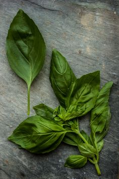 Commonly used Thai food: Basil Leaves