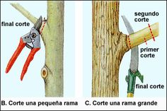 Useful tips and information on tree pruning, surgery and repair. Why, when and how to prune your trees. Garden Shrubs, Garden Soil, Garden Trees, Growing Fruit Trees, Growing Herbs, Outdoor Landscaping, Outdoor Gardens, Tree Pruning, Trees And Shrubs