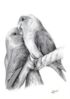 Coloring for adults kleuren voor volwassenen Dotted Drawings, Bird Drawings, Pencil Art Drawings, Love Birds Drawing, Bird Pencil Drawing, Realistic Animal Drawings, Amazing Drawings, Animal Sketches, Art Sketches