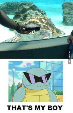 pokemon, memes, catch 'em all, that's my boy