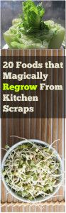 20 Foods that Regrow Itself from Kitchen Scraps - basil, lettuce, tomato, cherries and more!