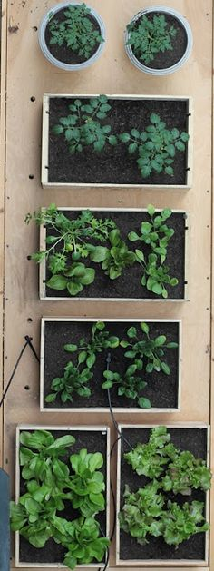 Courtyard container garden: wine boxes and pots arranged on some old steps. How lovely!