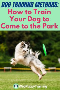 Are you struggling to make your dog come to the park and be a cool dog? Learn some dog training methods that will let you manage your dog in the public parks. #dogtrainingmethods   #bestdogtrainingmethods Dog Training Methods, Dog Training Techniques, Puppy Training Tips, Potty Training, Training Your Dog, Puppy Barking, Dog Potty, What Dogs, Best Puppies