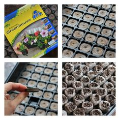 jiffy peat pots greenhouse for plant starters: totally biodegradable and good for the soil and the plant! The greenhouse is reusable!