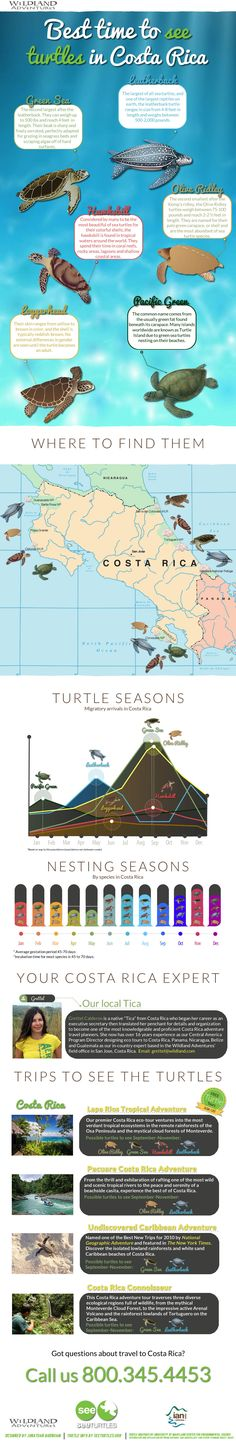 The best time to see turtles in Costa Rica: http://www.wildland.com/SeeTurtles.aspx #Travel #Turtles #Infographics #CostaRica