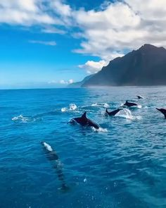 Pod of dolphins playing near Kauai's Na Pali's coast 🐬 Tag someone who would love this! Video by Beautiful Photos Of Nature, Beautiful Places To Travel, Nature Pictures, Amazing Nature, Beautiful Sea Creatures, Animals Beautiful, Surfing Pictures, Nature Gif, Applis Photo