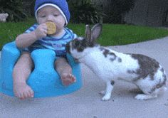 """That damn rabbit stole the cookie from me!"""