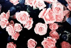 #pink #roses desktop background images ---> on my blog!