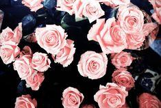 #pink #roses desktop background images ---> on my blog!                                                                                                                                                                                 More