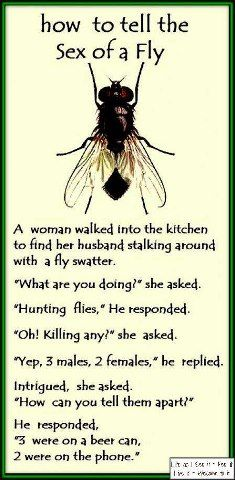 fly sexing