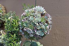 more succulents!  love them!