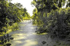 Canal - Point Pelee 1a by WilkiePhotography on Etsy