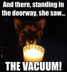 NOT THE VACUUM!!