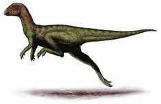 """Art illustration - Aquatic Animals - Squalodon: (""""shark ..."""