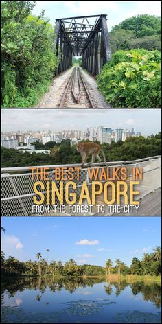 The best walks in Singapore -- from the urban jungle of downtown Singapore to the green jungle of the nature reserves.