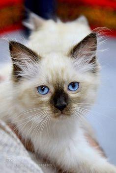 Kitty by feneek2010 via http://ift.tt/2gwTSyL