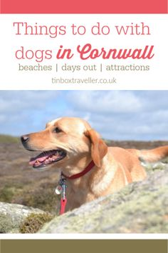 Finding good days out for kids and dogs can be a challenge. Here's a guide to attractions that will be a hit with the whole family in dog-friendly Cornwall Cornwall England, Devon And Cornwall, Yorkshire England, Yorkshire Dales, Adventure Awaits, Family Adventure, Adventure Travel, Places In Cornwall, Cornwall Beaches