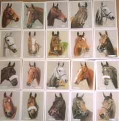 Heads of Famous Winners  Complete Mint set of 20 cards  By outstanding Equestrian Artist Nigel Brunyee