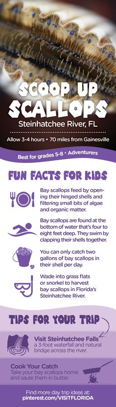 Scalloping fun facts for kids Steinhatchee Florida, Visit Florida, Florida Vacation, Florida Travel, Boating Tips, Fun Facts For Kids, Vintage Florida, Scallops, Travel Goals