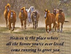 Wow I will look forward to that moment, as I will have a huge herd of them, it take me all day to count them all, as I had a lot of horses though out my life, my whistle always had them gallop up towards me with skidding halt to stand in front of me and resting their heads into me, how I miss them, horses are a part thats missing inside of me.