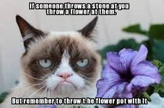 For more Grumpy Cat stuff, gifts, quotes and meme visit… Grumpy Cat Quotes, Funny Grumpy Cat Memes, Funny Animal Memes, Funny Cats, Funny Animals, Cute Animals, Grumpy Kitty, Cats Humor, Animal Humor