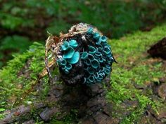Chlorociboria aeruginascens- green elfcup or the green wood cup Wild Mushrooms, Stuffed Mushrooms, Mushroom Pictures, Slime Mould, Mushroom Fungi, Arts And Crafts Movement, Plant Wall, Weird And Wonderful, Natural Wonders