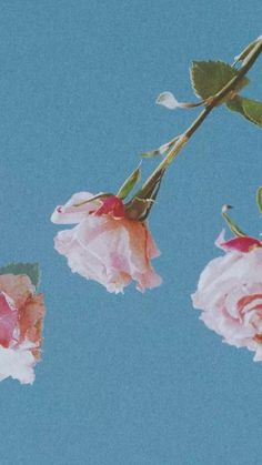 Taylor Swift 🦋🌸 – – Wallpaper World Flower Aesthetic, Blue Aesthetic, Tumblr Wallpaper, Screen Wallpaper, Galaxy Wallpaper, Disney Wallpaper, Aesthetic Pastel Wallpaper, Aesthetic Wallpapers, Cute Backgrounds