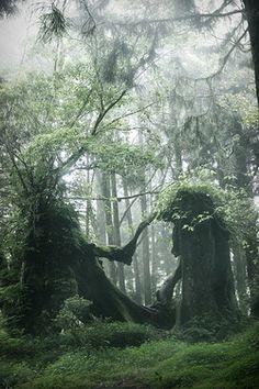 Was die Natur zustande bringt: Die beiden Bäume sehen aus, wie geheimnisvolle Kreaturen mit Kopfschmuck, die sich die Arme entgegenstrecken und an den Händen fassen.  Nature's Love