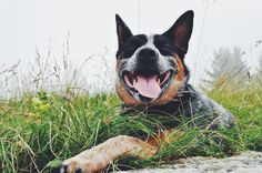 Luv U. Almost 11 months! Piuma #acd smiling into the wild Grappa mountain