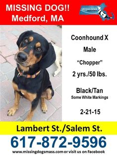 Please spread the word about missing dog Chopper! Sharon Boulanger