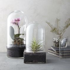 It might be rare to see the original oversized French garden cloches protecting delicate winter greens in the outdoor garden, but glass cloches still have their place on mantelpieces and bookshelves inside.