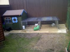 Outdoor Rabbit runs UK Rabbits United Forum paved an area and moved the bunnies in, not finished
