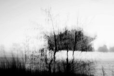 Nature Abstract Photography, Black and White