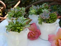 Special Listing for Juliet - 30 Succulent Bridal Shower Favors, Rustic Wedding Favors, Vintage Wedding. $135.00, via Etsy.