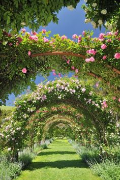 an alley of rose-covered arches