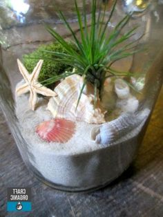 Air Plant Terrariums 44 Great Ideas