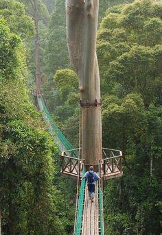 Rainforest Kanopy Walkway, Borneo