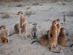 Xerus Mob - Meerkats Fanon Wiki - Wikia Animal Alphabet, Animals, Animais, Animales, Animaux, Animal