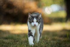 King of the backyard my cat Koki