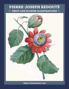 pierre-joseph-redoute-flowers.jpg (1020×1320)