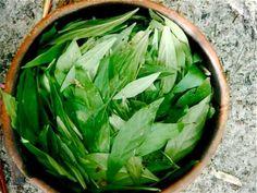 Ayahuasca-–-Ethnobotanical-Medicine-May-Treat-Neuro-Degenerative-Conditions