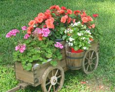 Begonias and Geraniums in a flower cart, Oh My!!