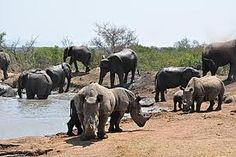It can get busy around some of the waterholes. Game Reserve, Beautiful Places, Elephant, Stone, Pictures, Animals, Photos, Rock, Animales
