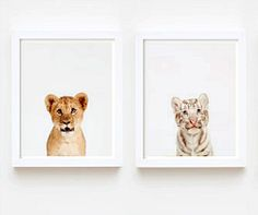 Real baby animal photographs for a baby's room. So cute! #photography