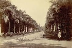 calcutta botanic garden - Google Search
