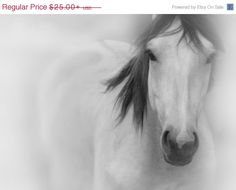 On Sale Horse Photography in Black and White  Large by StudioDandK