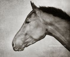 #horse profile