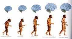 Escuela bloguera: Los antepasados del hombre Brain, Shape