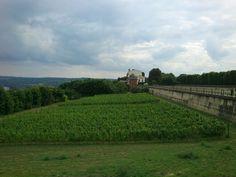Still St Germain en Laye, looks like a very small vineyard